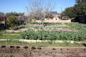 hortienergies